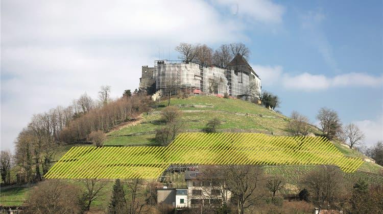 Den Kahlschlag eines US-Forschers korrigieren: Liefert der Schlossberg bald mehr Wein?