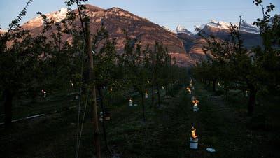 Die Obstbauern kämpften sich durch die Frostnacht – ein Chriesi-Bauer erleidet Totalausfall