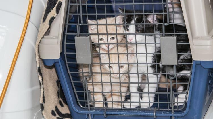 Ausgesetzte Vierbeiner ziehen vom Provisorium ins Basler Luxus-Tierheim