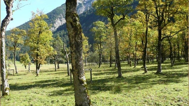 Bergahornweiden sind Hochburgen der Artenvielfalt