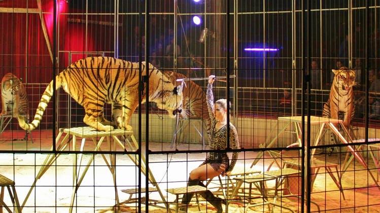 Der Circus Royal lockt auch in Basel mit Freikarten – Dreiste Masche oder schlaue Marketing-Strategie?