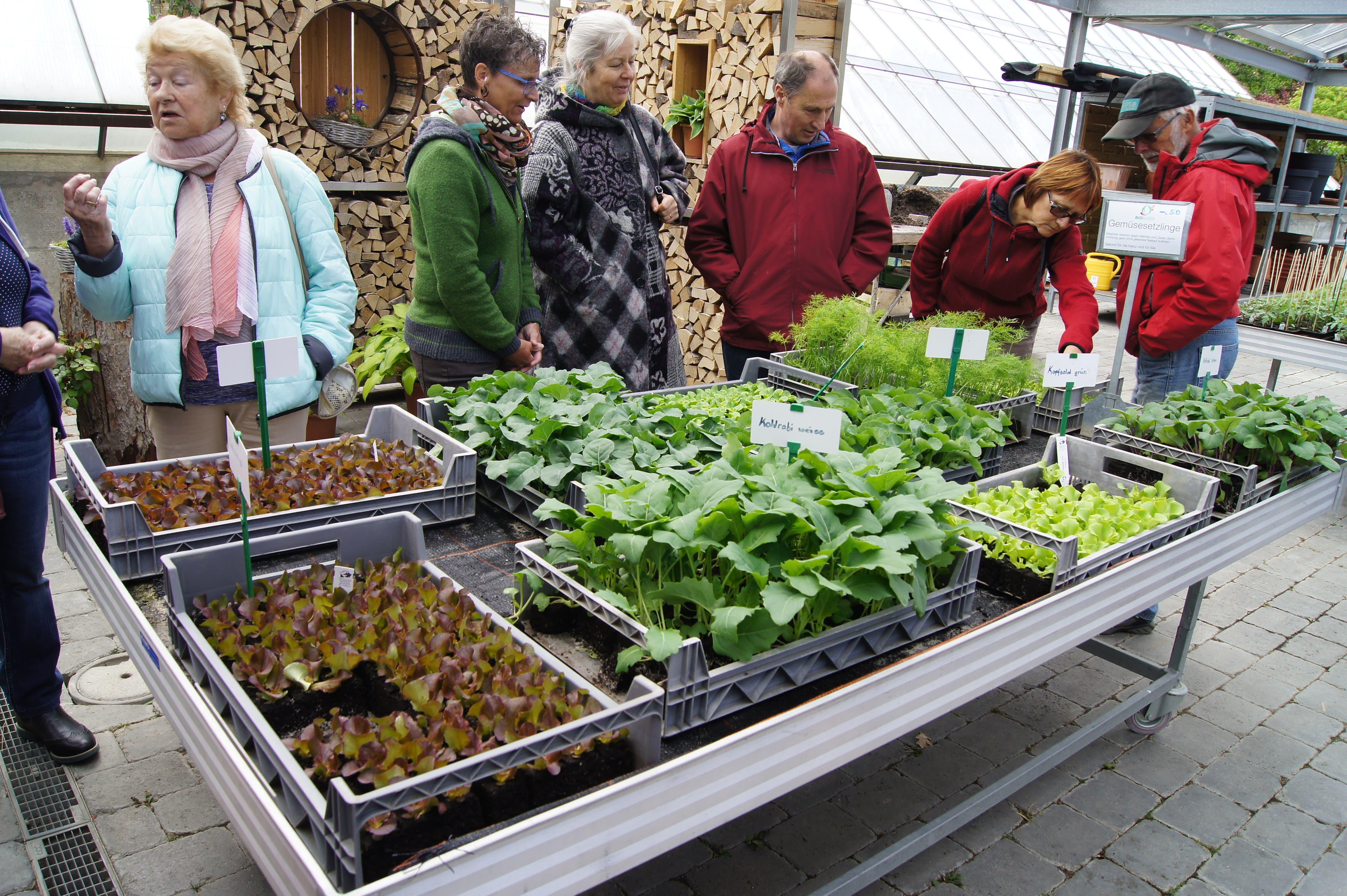 Besucher inspizieren auf dem Neuhof-Märt Bio-Kräuter aus eigener Kultur[4]