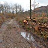 Flächenhiebe sind Pro Bözberg ein Dorn im Auge - Verein will handeln