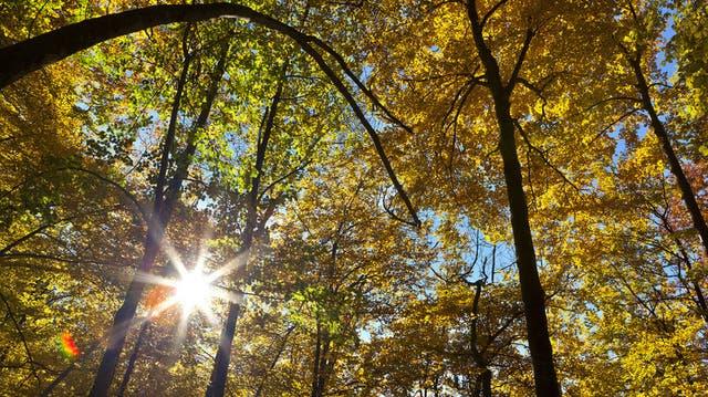 Waldbesitzer-Verband tagte in Riedholz