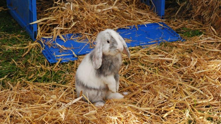 Kaninchen aus Deptford – Kinder sind nüchtern denkende Biester