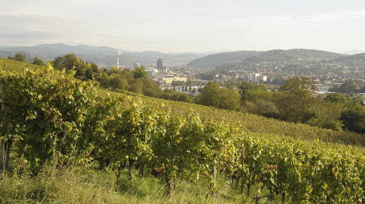 Riehener Wein aus neuen Händen: Ullrich-Dynastie übernimmt am Schlipf