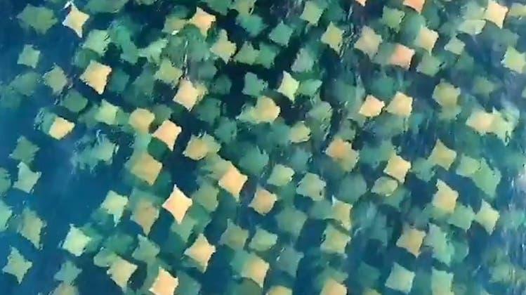 Faszinierendes Naturschauspiel: Was sehen Sie hier im Wasser?