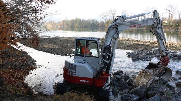 Fischer holen Beton aus dem Rhein und hoffen auf vermehrtes Laichen