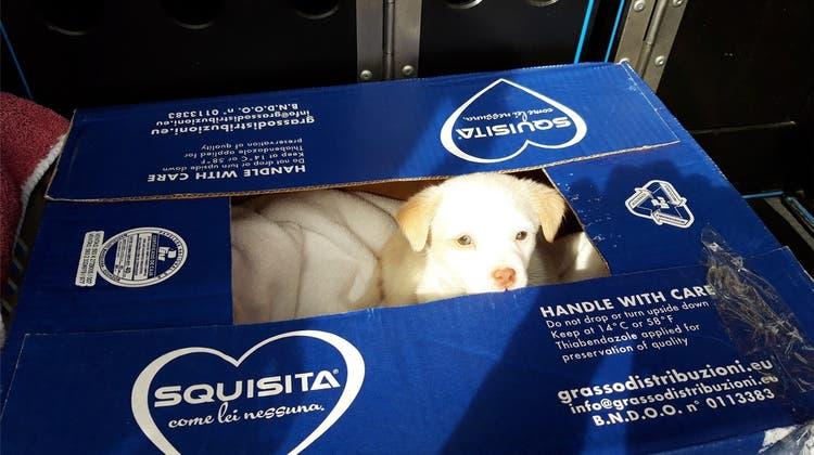 Hundewelpe in Kartonschachtel ausgesetzt – er rief verzweifelt nach seiner Mutter