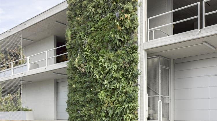 Bonus für grüne Wände gefordert: «Für solche Massnahmen sollen Bauherrschaften belohnt werden»