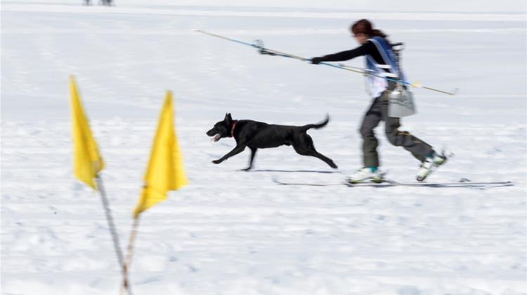 Die besten Lawinenhunde der Schweiz