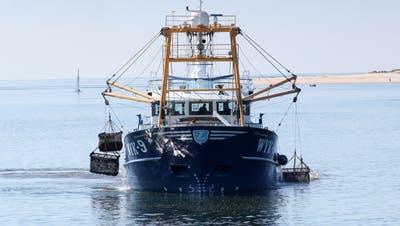 """Französische Fischer: """"Muschelkrieg"""" im Ärmelkanal beendet"""