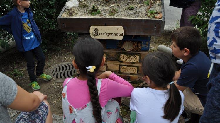 «Wissen den Eltern weitergeben»: Kinder setzten sich mit der Biodiversität auseinander