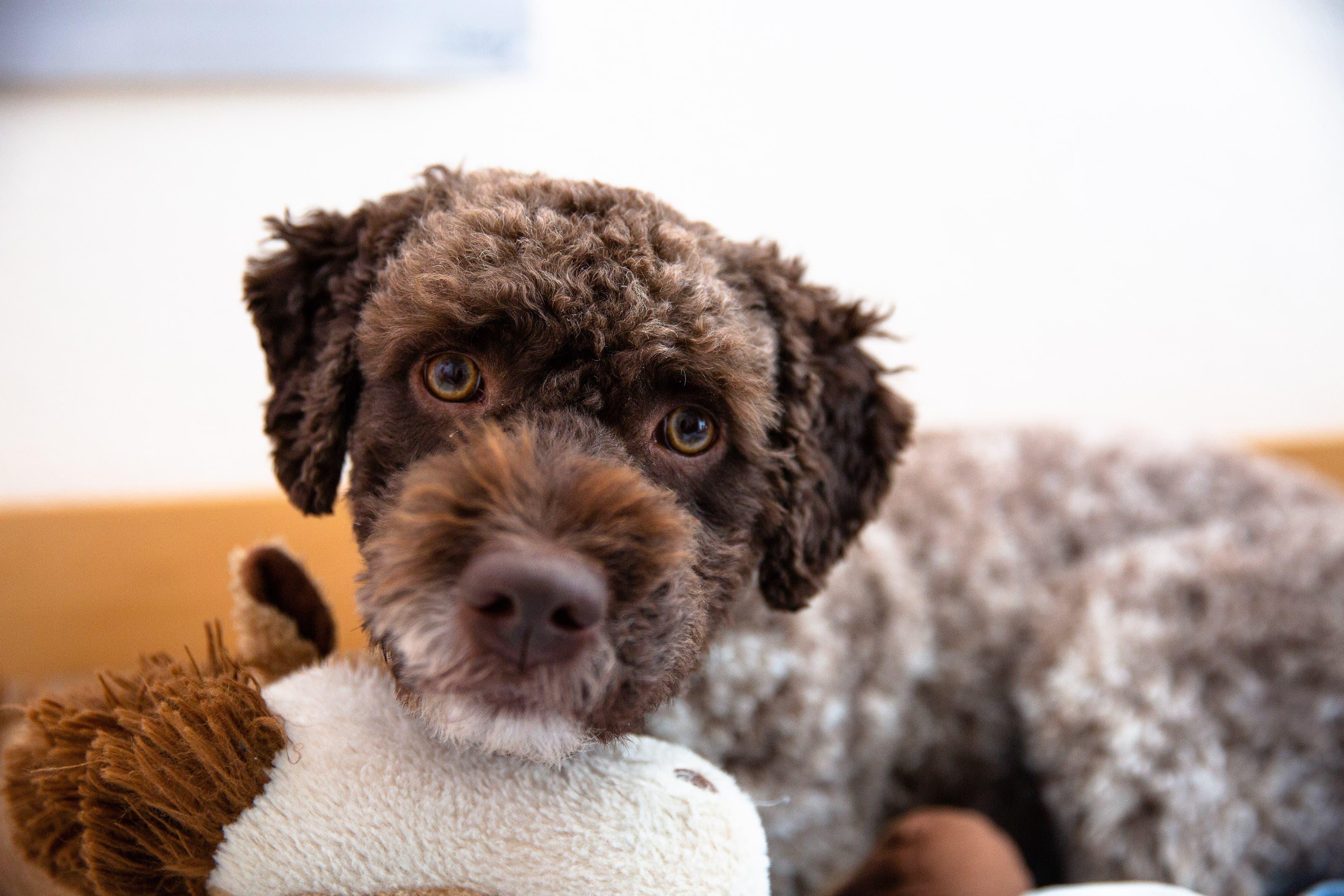 Zu Besuch bei Familie Steiner Auch er gehört zur Familie: Hund Noccio.