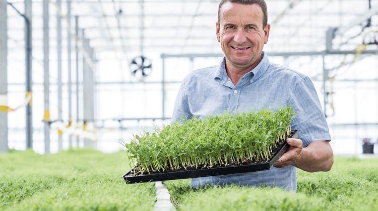 Innovativer Gemüseanbau: Das ist der neuste Hit aus dem Baselbiet