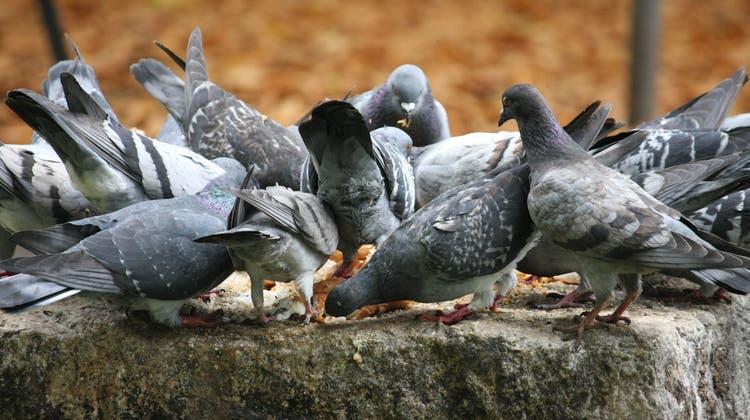 Betteln und Böxli erlaubt, Tauben füttern verboten: Basel-Stadt sagt Ja zum Übertretungsstrafgesetz