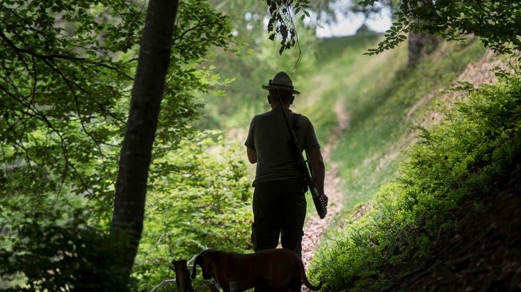 Jäger erschiesst auf Wildschweinpirsch seinen Vater