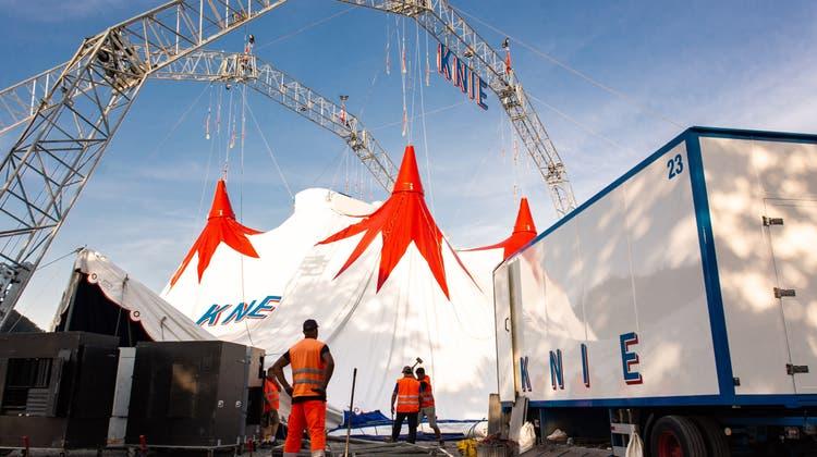 Mit vereinten Kräften hochgezogen – Zirkus Knie stellt das Zelt auf dem Schachen auf