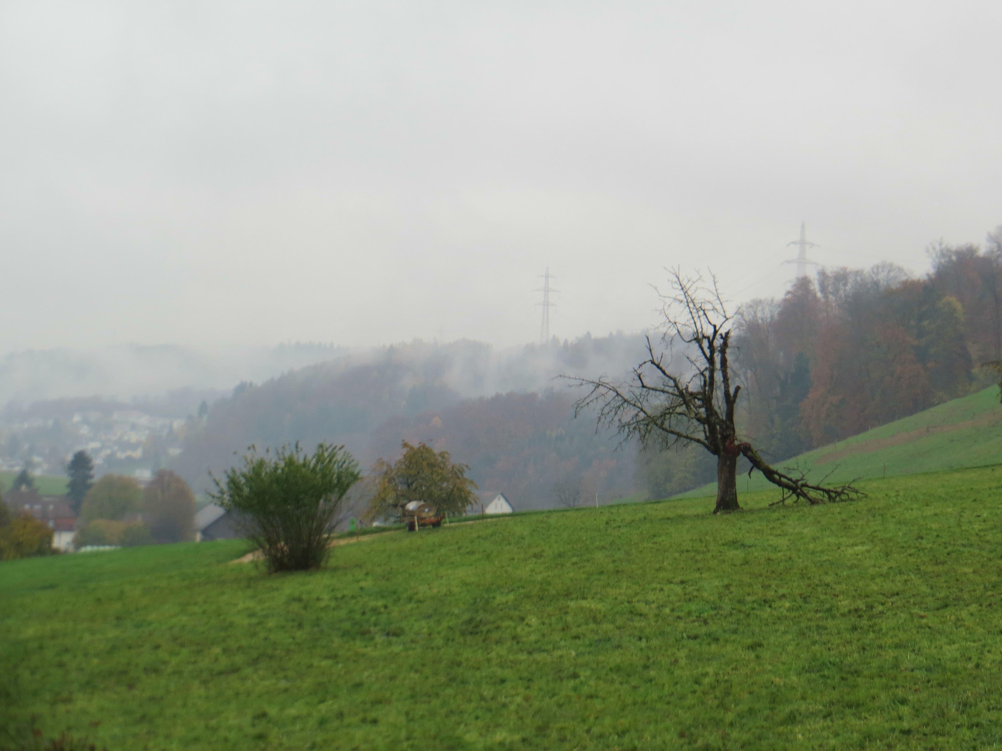 undefined Hier die Wiese noch auf Boden von Frenkendorf, danach schon der Bann Liestal