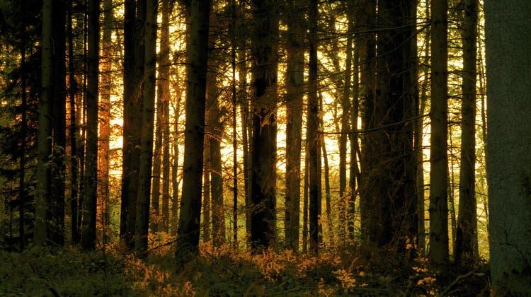 Forstarbeiter wird beim Fällen eines Baumes schwer verletzt
