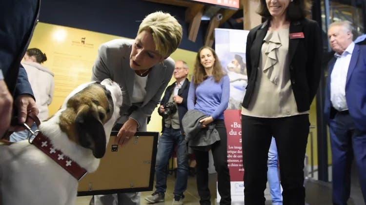 «Ich bin sehr stolz»: Karin Keller-Sutter übernimmt Patenschaft für Bernhardiner «Zeus»