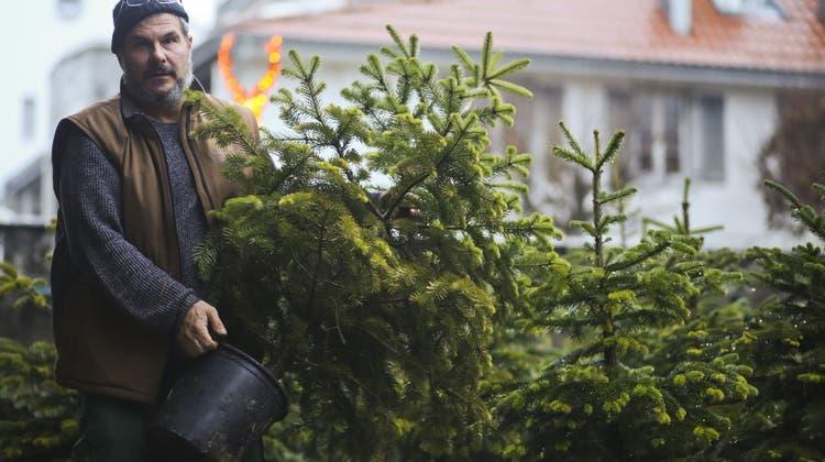 Piksende Nachhaltigkeit: Hier wächst der Weihnachtsbaum mit der Familie mit