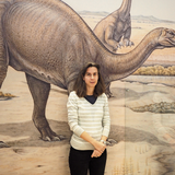 Mehr als 10'000 Besucher: Das Sauriermuseum hat ein Rekordjahr hinter sich