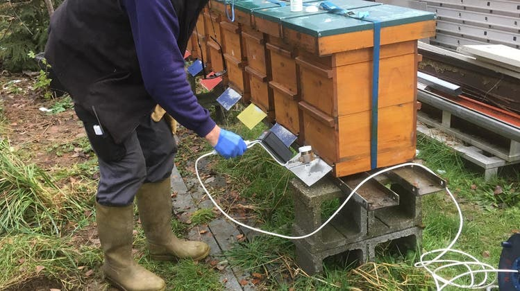 Kampf gegen Varroa im Winter: Der Bienenzüchterverein Gäu stellt ein neues Gerät zur Verfügung
