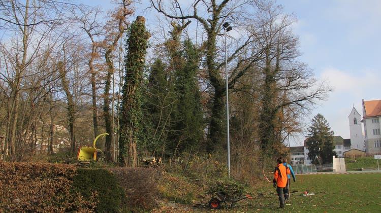 Mit der Motorsäge im Freudenstein-Wäldli: Forstbetrieb weiss von nichts