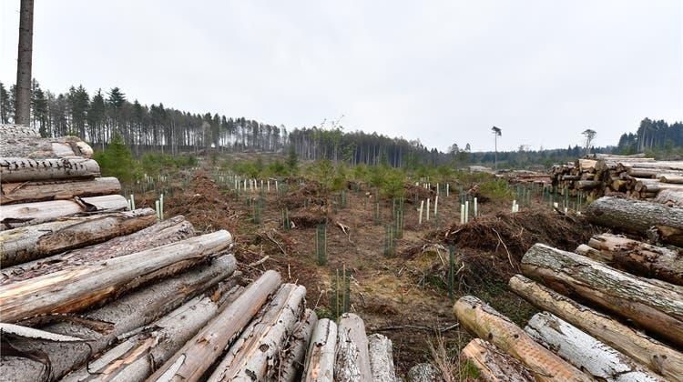 Kestenholzer Brügergemeinde: Burglind-Schadflächen sind bepflanzt