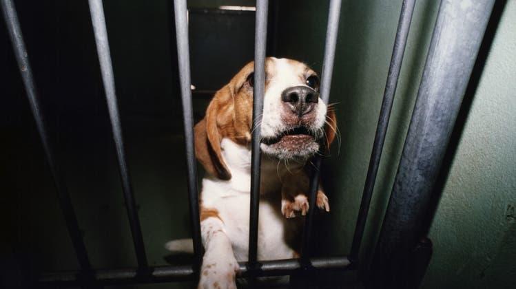 Basler Tierversuchsleiter setzt sich über Gesetz hinweg und wird gebüsst – nun wehrt er sich