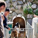 Schweine in der Höhle und Kälber im Iglu: So schön haben es die Tiere bei Bauer Lüscher