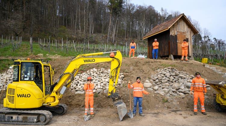 Baustelle im Weinberg: Sie schaffen ein Paradies für Eidechsen