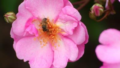 Mission B - So werden auch Sie zum Bienenfreund!