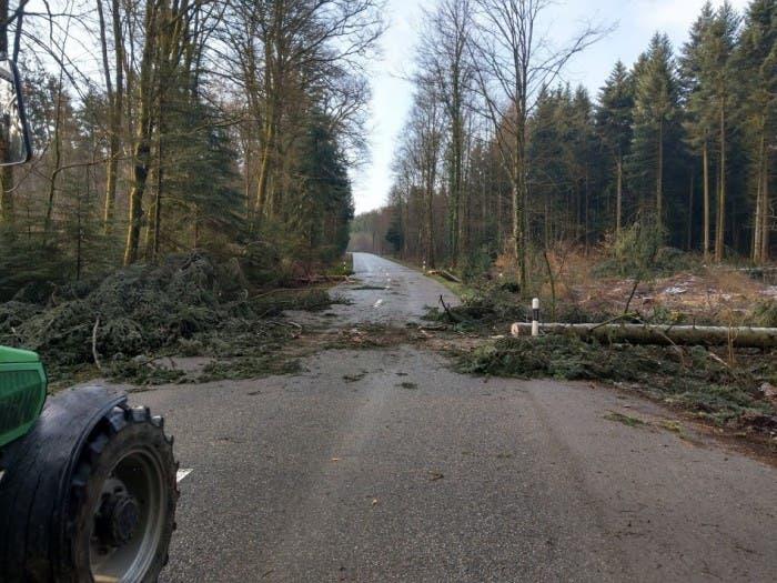 Im Hardwald ist ein Baum auf die Kantonsstrasse zwischen Leuggern und Böttstein gefallen.
