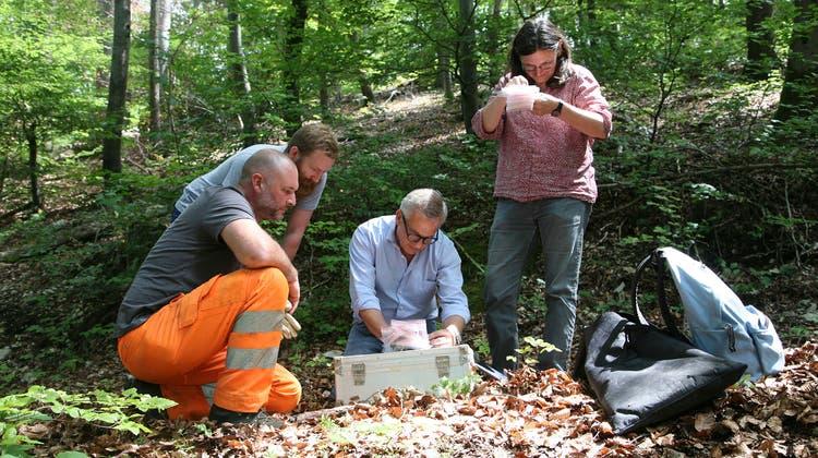 Die Archäologie Baselland findet Allschwiler Zeugen aus der Bronzezeit