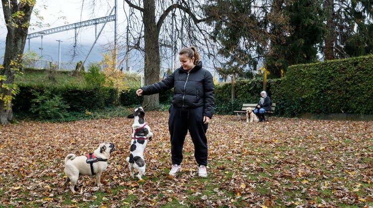 Auf der neuen Hundewiese können die Tiere frei herumtollen