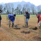 Mit der Pflanzung von 100 Sträuchern und Bäumen wurde am Donnerstag eine von vielen Massnahmen zur Verbesserung des Lebensraumangebots umgesetzt. (Corinne Hanselmann)