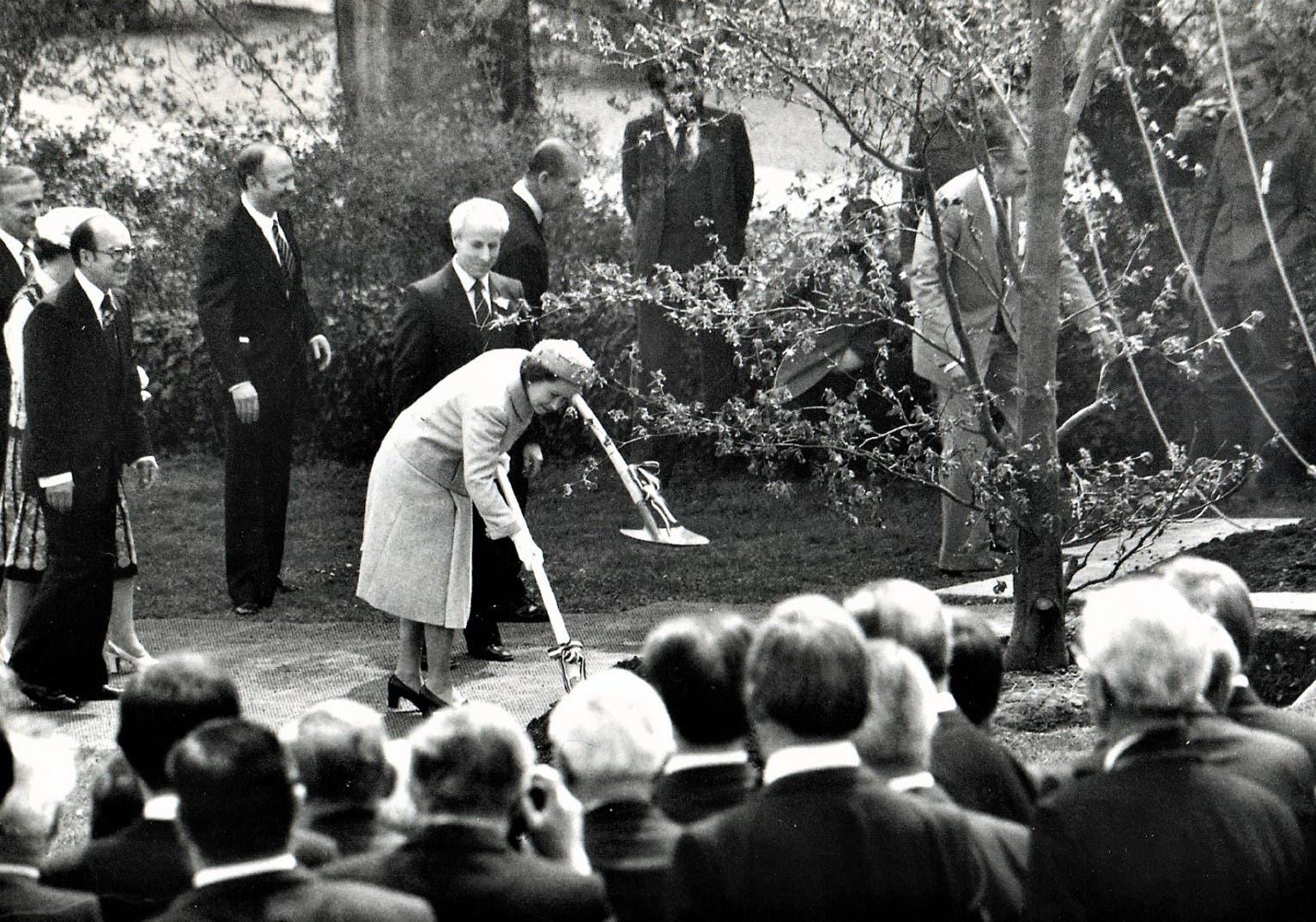 Queen Elizabeth II setzt bei ihrer Visite eine Blutbuche. Die ging rasch ein. Das lag aber nicht an der Behandlung der Englischen Majestät, Schuld war Hangwasser. doch wegen Hangwasser.