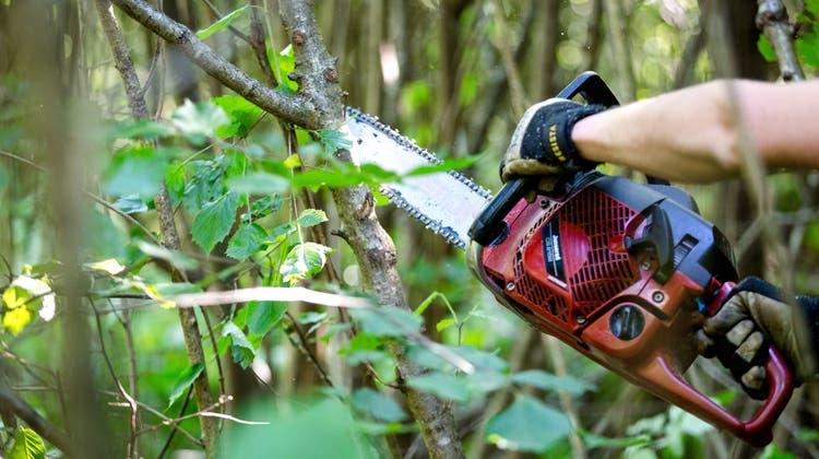 «Echte Win-win-Situation»: Bürgergemeinde soll Leitung eines anderen Forstbetriebes übernehmen