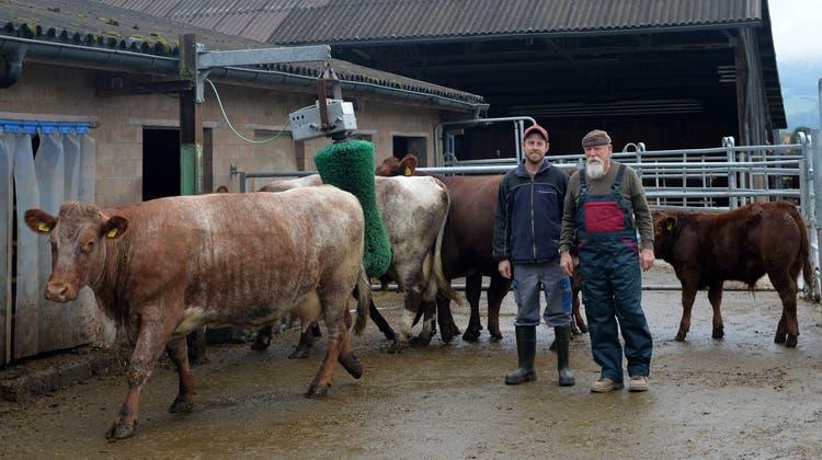 Deitinger Hof züchtet das Shorthorn-Rind als einziger weitherum