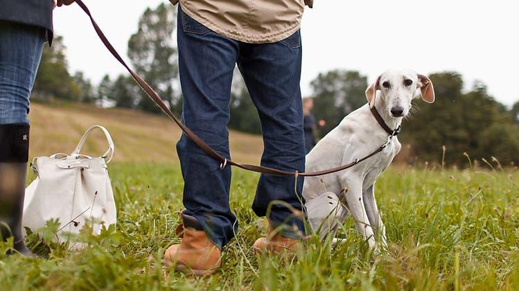 Von saisonaler Leinenpflicht bis Hundeverbot: Stadt ordnet Änderungen der Hundezonen an