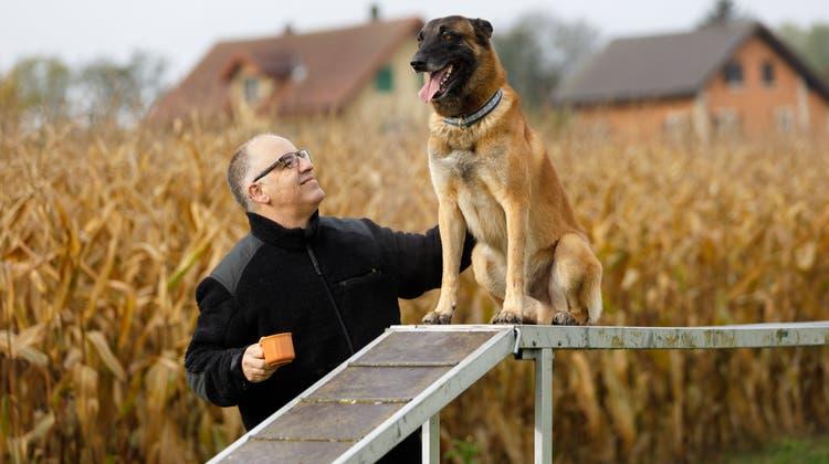 «Bin nicht gerne getrennt von ihnen»: Er hat in den Schäferhunden eine Passion gefunden