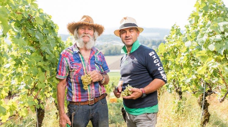 Eine Tonne Trauben: Wenn Vater und Sohn im Weinberg wümmen