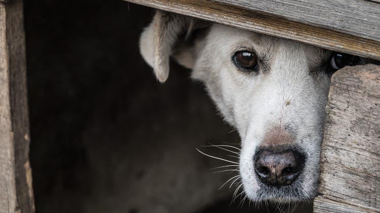 Tote Echsen und meterhoch Müll: Zwei Baselbieter Messie-Frauen dürfen keine Tiere mehr halten