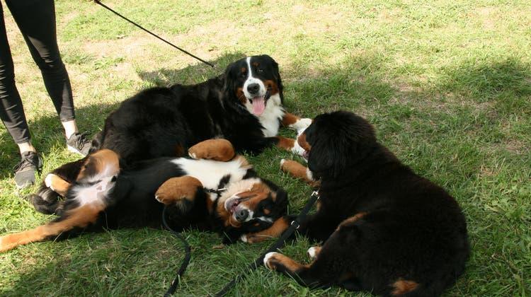 Die Hundekäufer haben vergessen, ihren Welpen am Zoll anzumelden. (Symbolbild) (Rosmarie Mehlin / BRU)