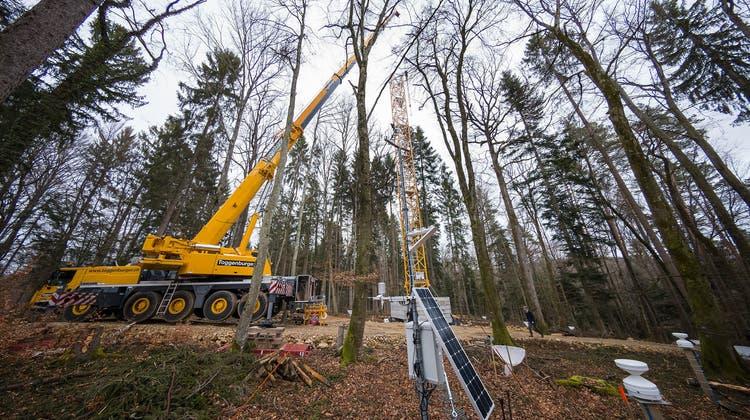 Klimawandel schädigt den Wald in Hölstein – und bringt der Uni Basel unerwartete Forschungsdaten