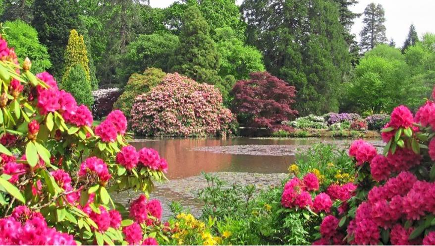 Blütenzauber im Südengland - April/Mai 2021