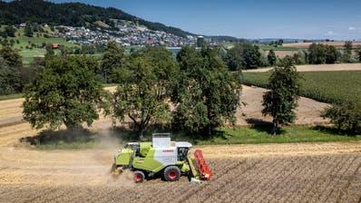 Mit den Kulturlandinitiativen soll das beste Ackerland - wie hier ein Weizenfeld bei Schötz - besser geschützt werden. (Bild: Pius Amrein (20. Juli 2020))