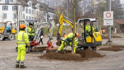 Stadtgrün St. Gallenpflanzt ein Baum ein. (Bild: Arthur Gamsa (25. November 2020))